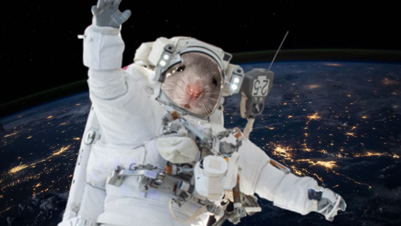 Mice flown to space by JAXA, SpaceX point researchers to protein that could slow ageing