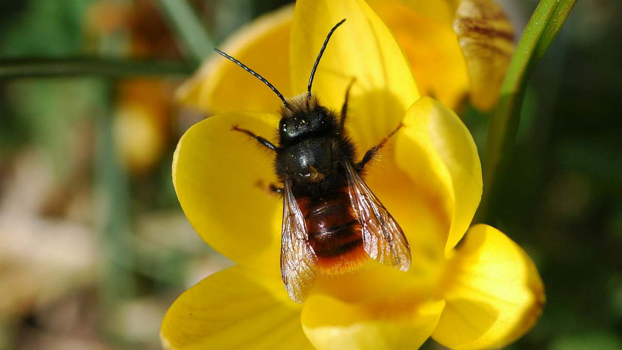 New map developed to show distribution of bee species, populations around the world