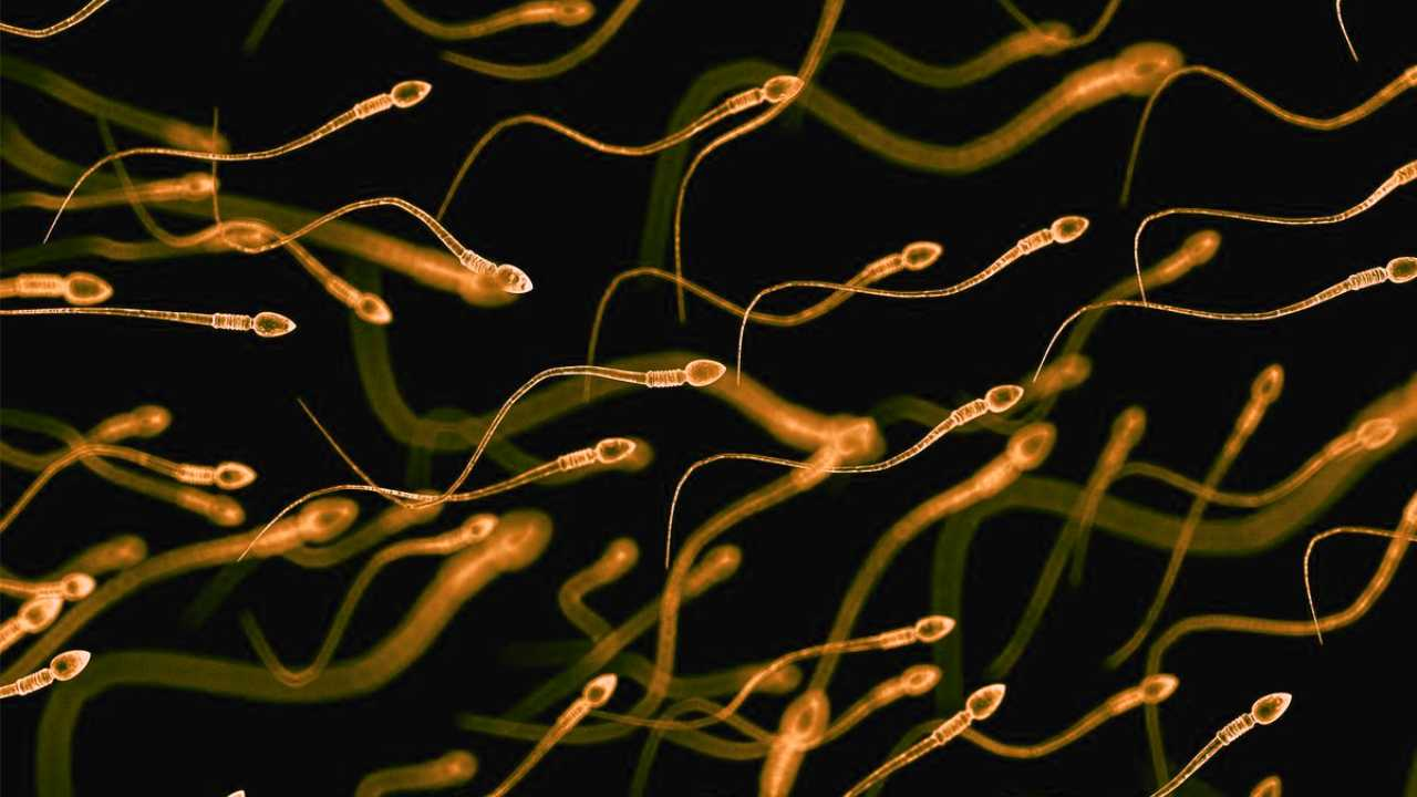 COVID19 could damage quality of sperm reduce fertility in men study suggests