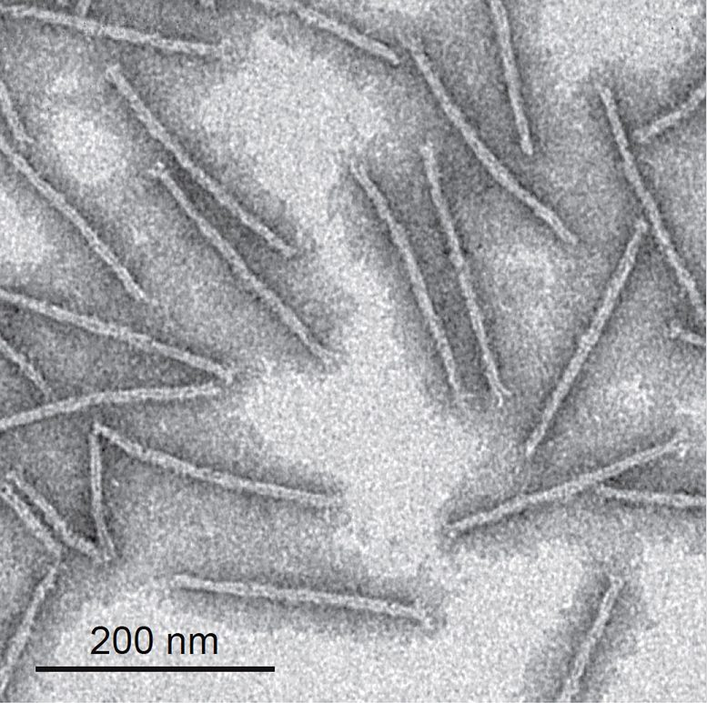 DNA Origami Wires