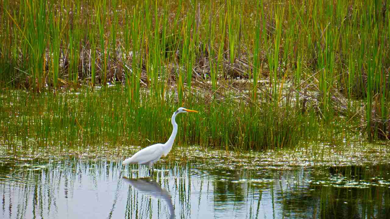 First dedicated Wetland Conservation and Management Centre under MoEFCC set up in Chennai