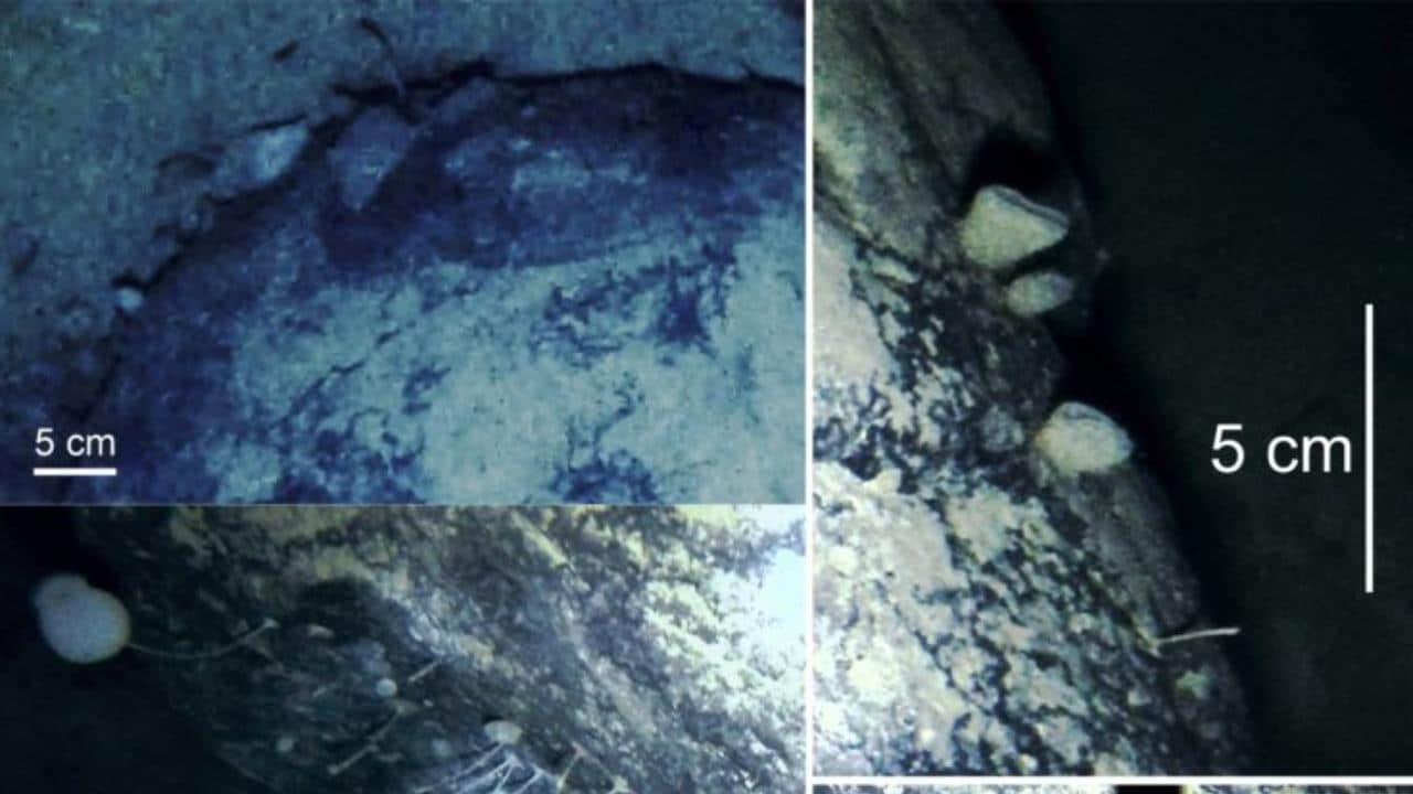 Scientists accidentally stumble across life buried 3,000 ft under ice in Antarctica