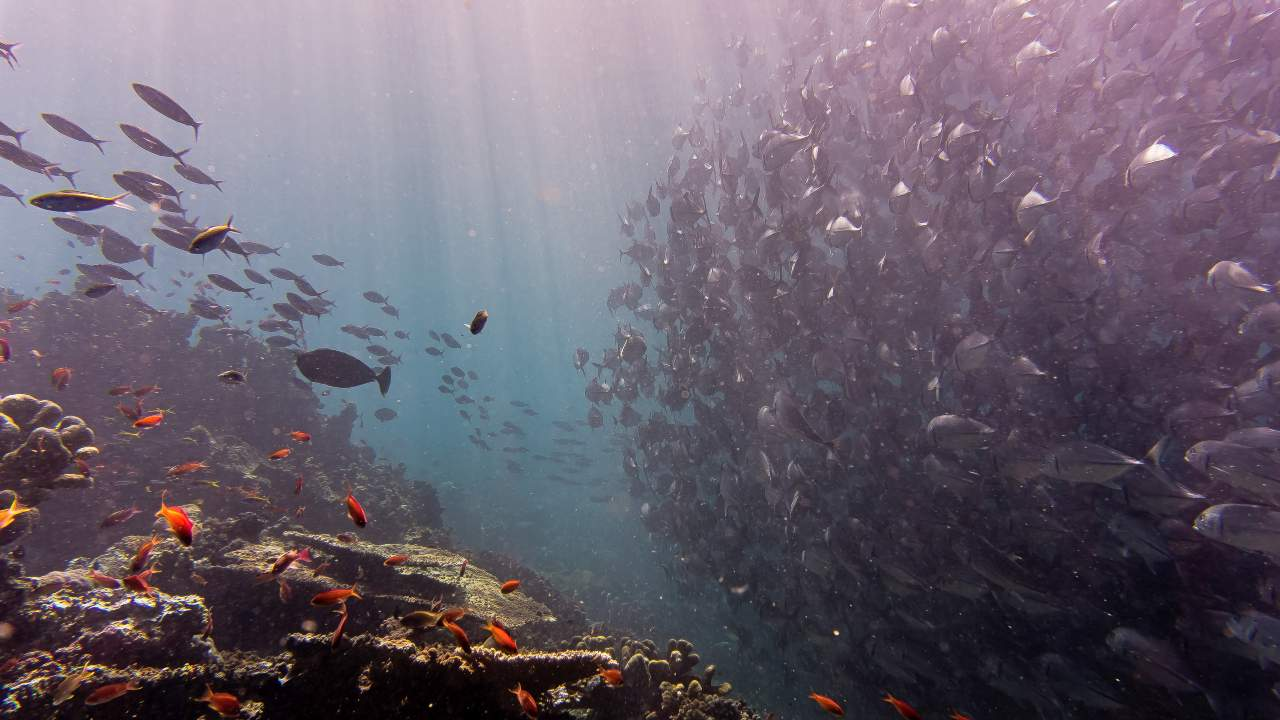 Undersea habitats to change, fragment as human-made sounds drown out their voices: study