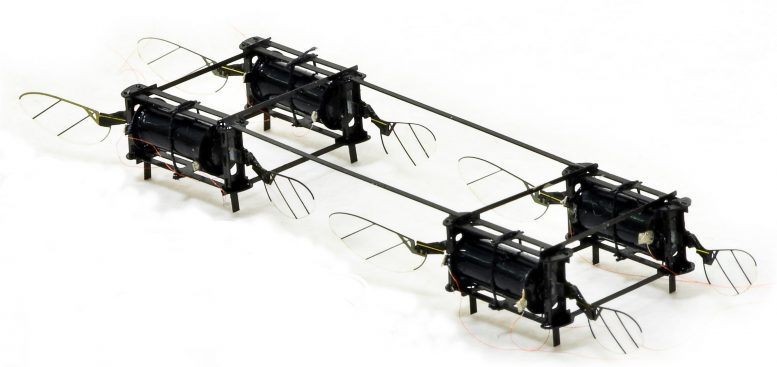 MIT Insect Robots
