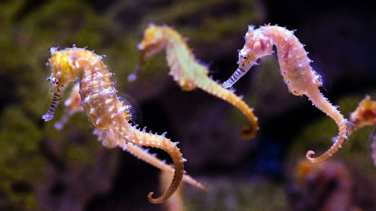 Warming climate is driving marine animals from the equator to the poles