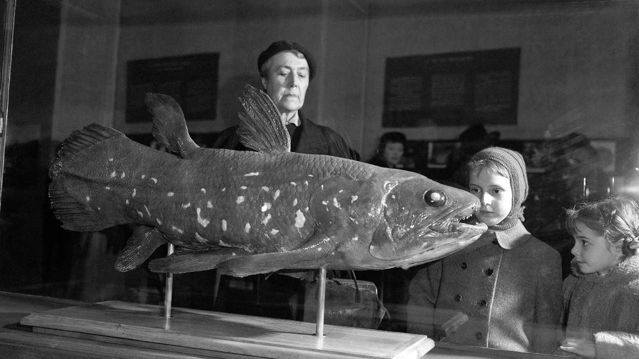 This is a file photo from 1954 that shows visitors to the Natural History Museum in Paris look at a coelacanth exhibit. Image credit: AP Photo/Pierre Godot