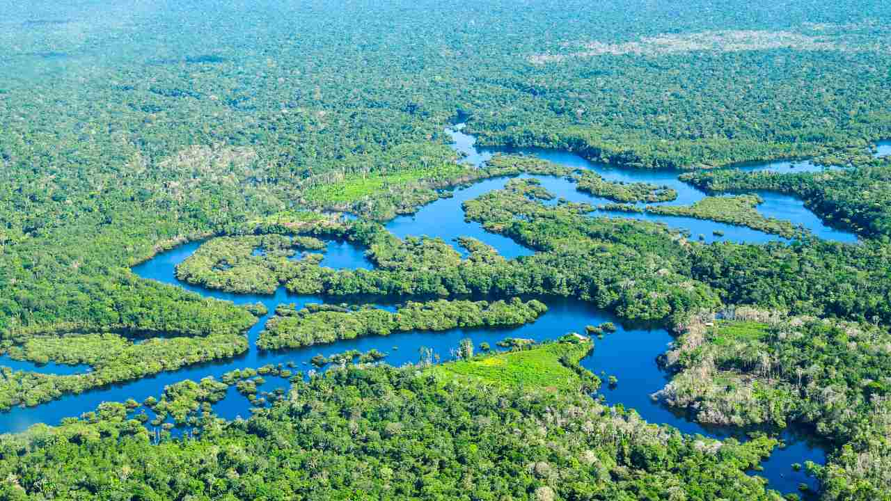 Aerial view of the Amazon Rainforest, near Manaus, the capital of the Brazilian state of Amazonas, Brazil. Image credit: Neil Palmer/CIAT/Flickr